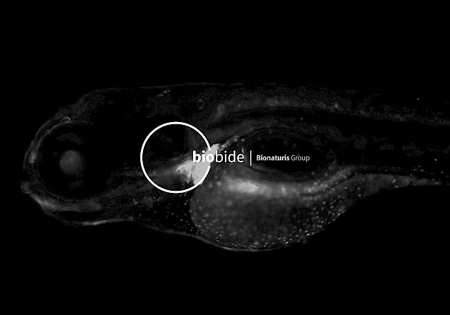 biobide web design move digital 06 branding
