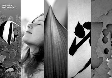 branding identity 20 enea website move logo consultancy
